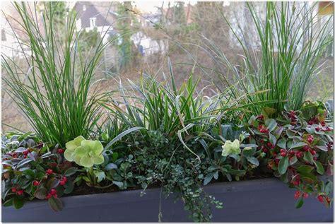 Balkon Sichtschutz Pflanzen Winterhart by Bluhende Winterharte Pflanzen Balkon Hauptdesign