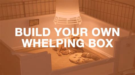 rottweiler whelping box how to build a whelping box breeds picture