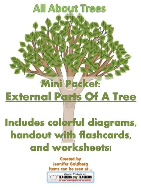 external trees all about trees mini packet external parts of a tree
