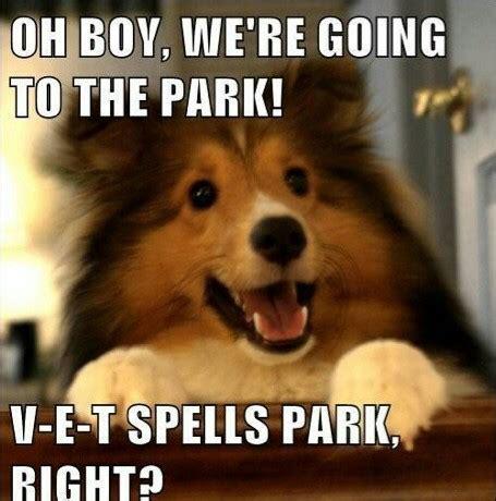 puppy memes pups  sale puppies  sale  ontario