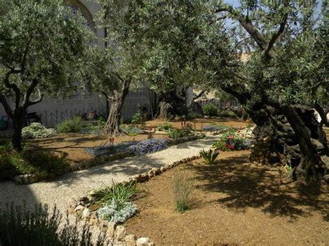 In The Garden Of Gethsemane by Garden Of Gethsemane Picture Of Garden Of Gethsemane