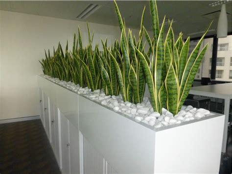 Interior Planter Boxes by Indoor Office Plants Hire Melbourne Inscape Indoor