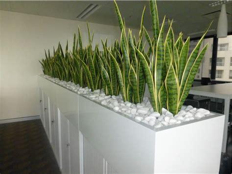 plant partition indoor office plants hire melbourne inscape indoor