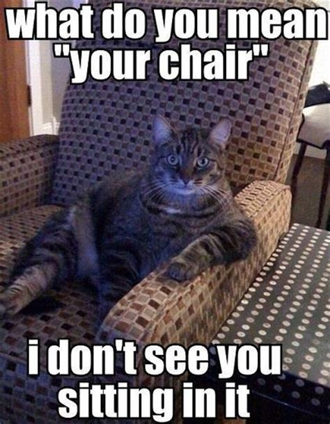 Cat Sitting Meme - funny cat what do you mean your chair