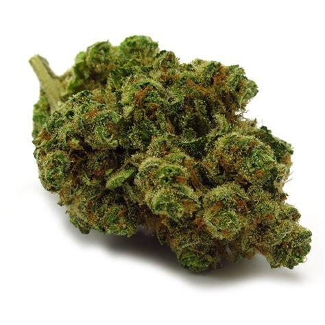 Cotton Buds Cinderella strain review utopia chiquita banana cannabis