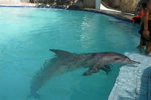 how is a pool file dolfin in a pool jpg wikimedia commons