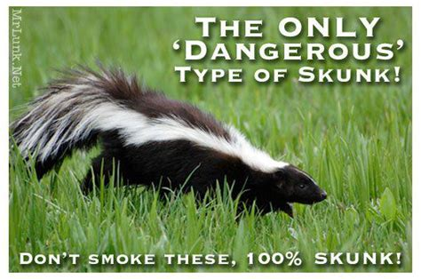 Skunk Meme - smoking skunk is dangerous
