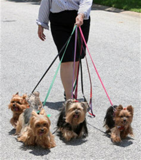 how much for a yorkie puppy caring for a terrier facts you should