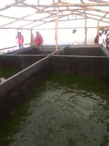 backyard catfish farming start a fish farm in your backyard you don t need to dig