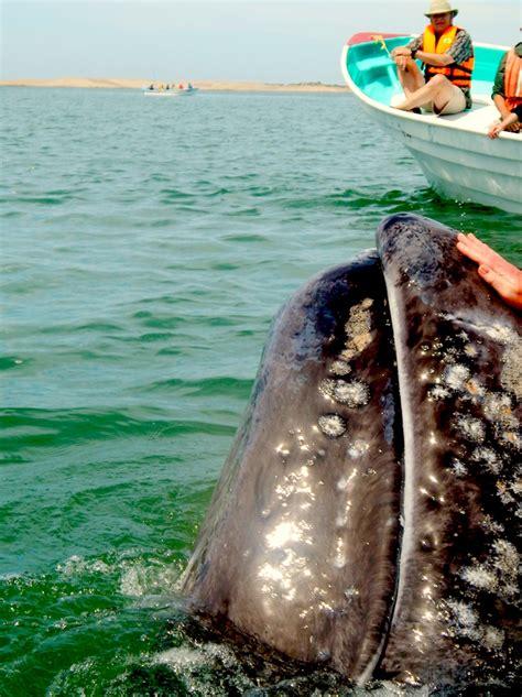 panga boats pros and cons how i became a travel writer barbara barton sloane