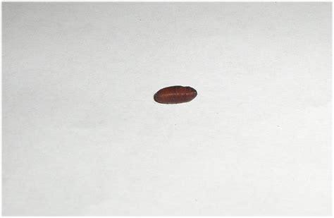 uringeruch aus teppich entfernen urin im teppich 21165320171026 blomap