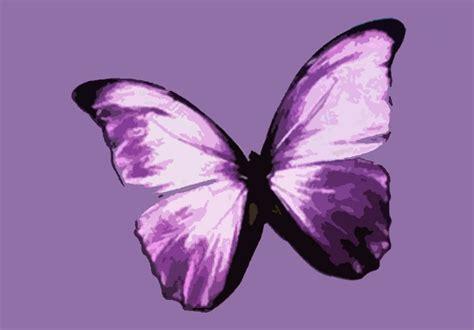 Butterfly P butterfly pop canvas artwork pop gallery on