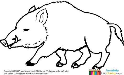 Kostenlose Vorlage Hirsch Wildschwein Zum Ausmalen Emsbachinnen Ausmalen Zeichnungen Und Malbuch