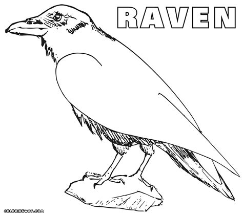 Exciting Graphic Collection Of Raven Coloring Page Ravens Coloring Pages