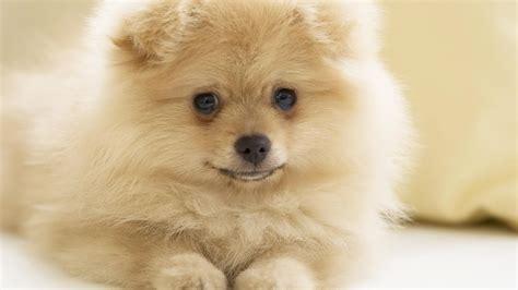 free desktop wallpapers backgrounds dog wallpapers for puppies wallpaper desktop 32 background hivewallpaper com