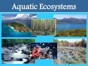 aquatic ecosystem reference at search