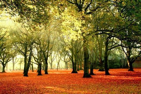 pemandangan hutan  menakjubkan gambar pemandangan