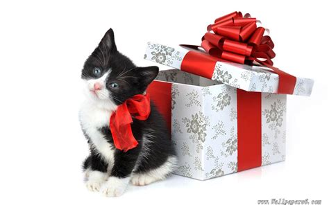 christmas little kitten with christmas gift animal