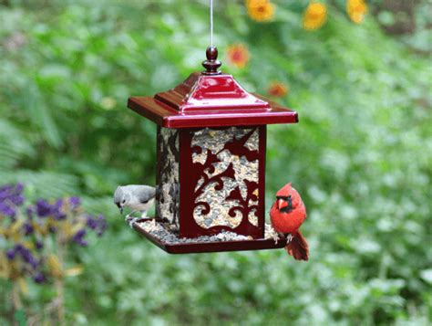 best squirrel proof wild bird feeders top rated wild bird