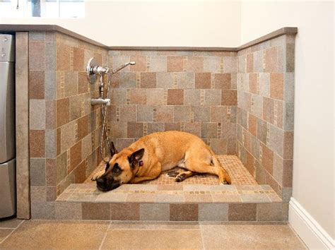 dog going to the bathroom in the house 15 doggone good tips for a pet washing station