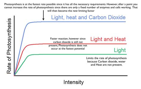 How Does Light Intensity Affect Photosynthesis by Unit 6 Plants Igcse Biology Revision Notes