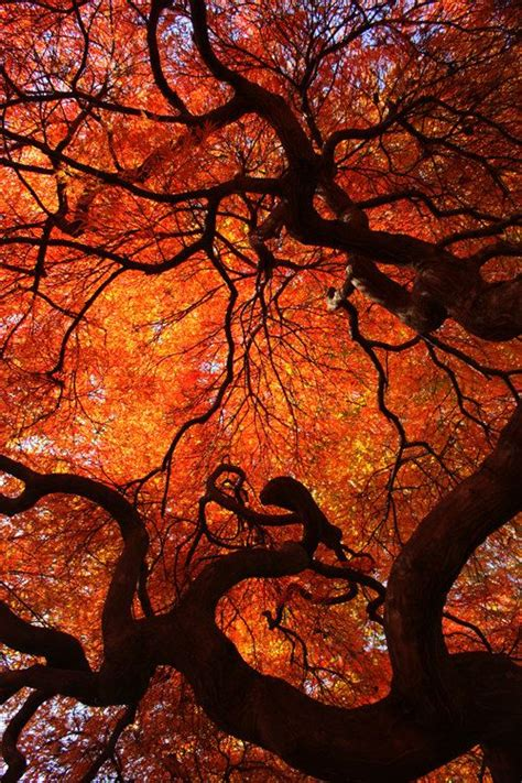eloquence color nature photography by ian wang red orange yellow autumn fall leaves leaf