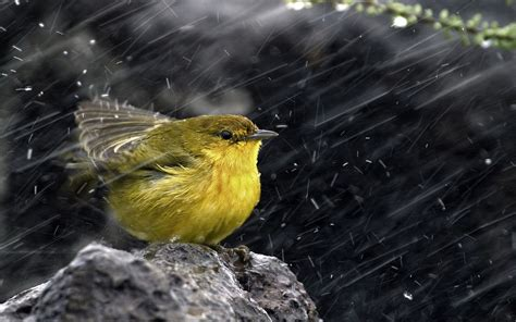 download rain birds wallpaper 1920x1200 wallpoper 428368
