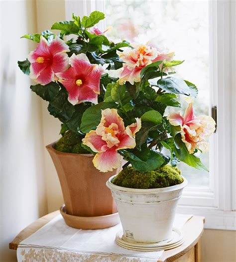 best flowering indoor plants