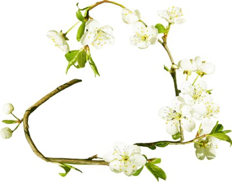 cornici fiorite cornice a cuore