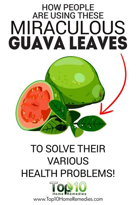Detox Guava Tea by Top 10 Health Benefits Of Guava And Guava Leaves Guava
