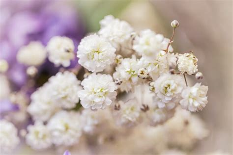 Types Of Flower Arrangements by Baby Breath Flower Meaning Flower Meaning