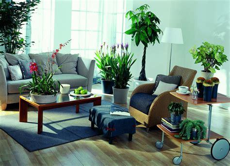 moderne zimmerpflanzen hauptnavigation moderne zimmerpflanzen