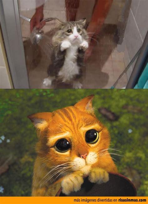 imagenes wasap gatos im 225 genes graciosas de gatos para whatsapp fondos