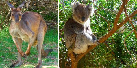 discount vouchers doncaster wildlife park 50 off urimbirra wildlife deals reviews coupons discounts