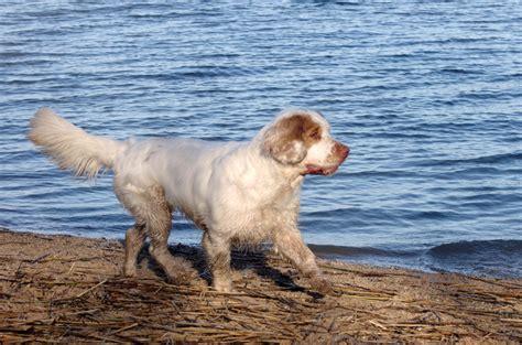 zwemvest voor teckel het hondenforum bekijk onderwerp een groep knappe