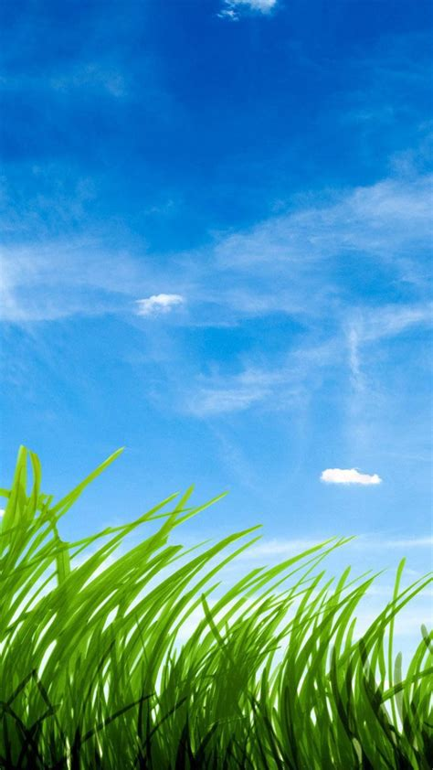 blue sky green grass wallpaper