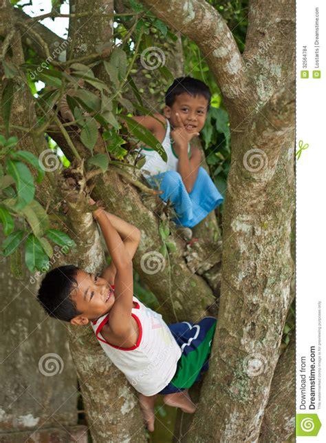 boys tree boys climbing trees editorial stock image image of