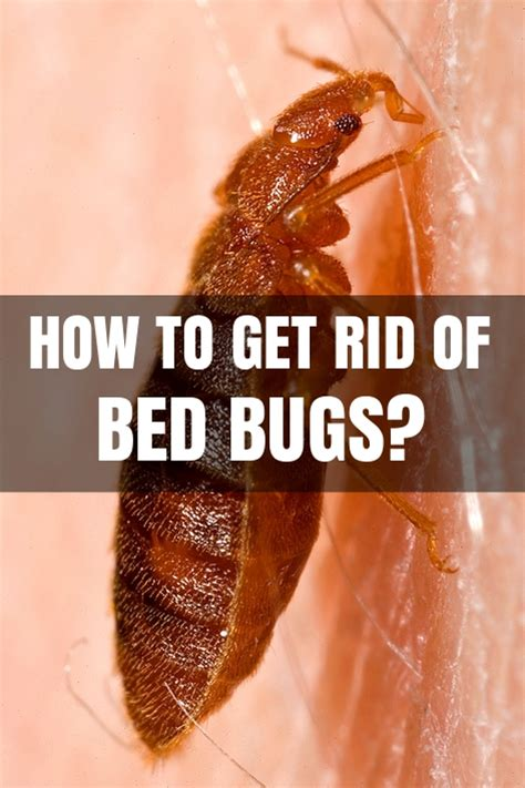 Quickest Way To Get Rid Of Bed Bug Bites