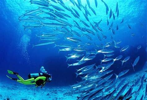 dive oman discover spectacular oman for world class diving scuba