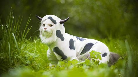 Image result for wacky animals