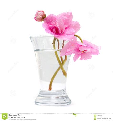 Pink Flower Vases by Vase With Pink Flower Isolated Royalty Free Stock
