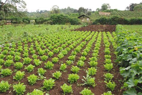 organic foods gibb s farm gibb s farm