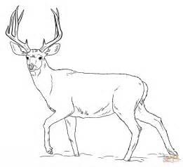 mule deer buck coloring free printable coloring pages
