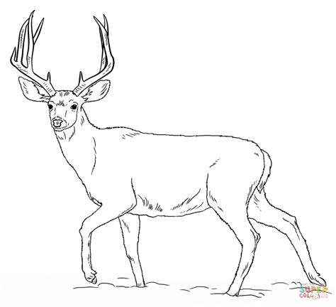 mule deer buck coloring page free printable coloring pages