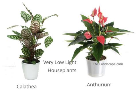 very low light houseplants 14 top houseplants you should pick for very low light area