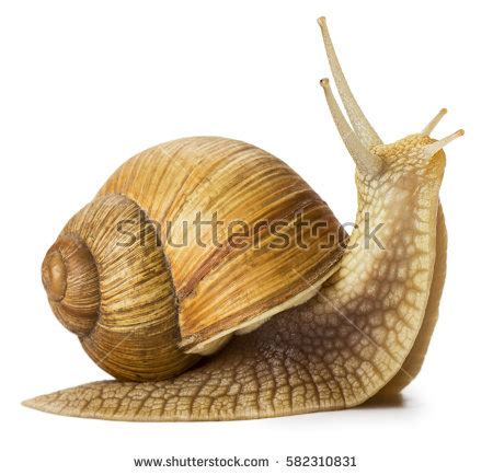 Snail Pic