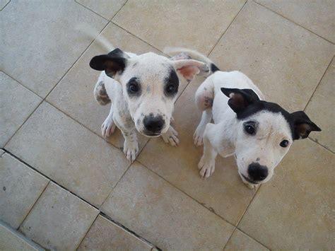 cuccioli in casa cuccioli bellissimi cercano casa petpassion