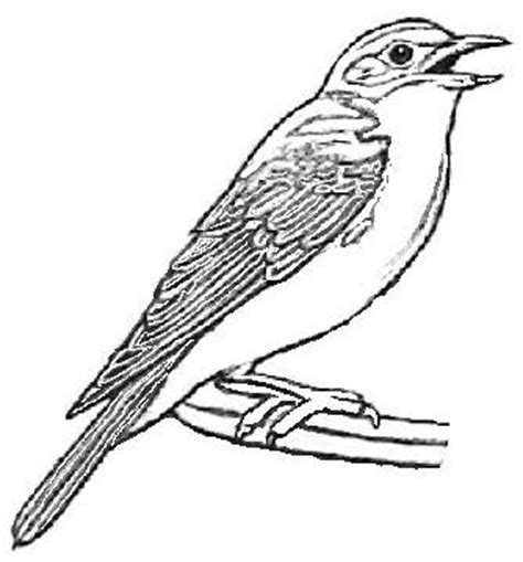 eastern bluebird coloring page blue bird coloring pages