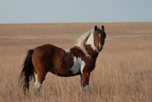 Black Mountain Oklahoma Mustangs Run Like The Wind Horse Roleplay Backyardherds Com