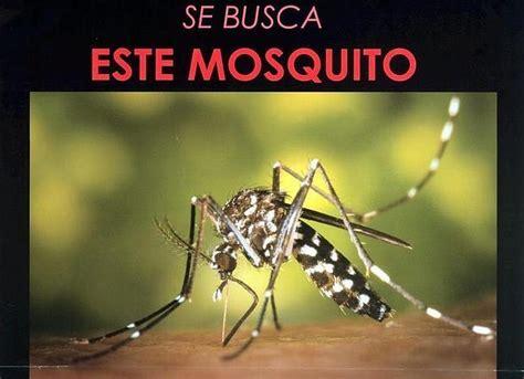 imagenes chistosas del zika espa 241 a corre riesgo de transmisi 243 n del virus zika por el